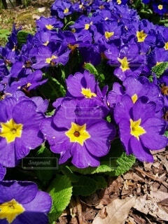 花のクローズアップの写真・画像素材[4754549]