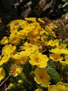 花のクローズアップの写真・画像素材[4754550]