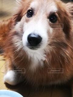 犬のクローズアップの写真・画像素材[4764383]