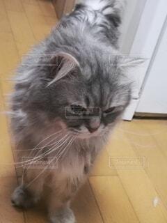 床に座っている猫の写真・画像素材[4764387]