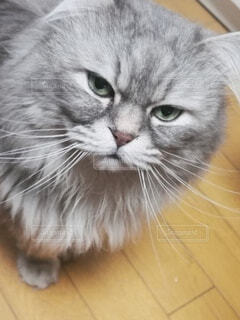 猫のクローズアップの写真・画像素材[4764389]