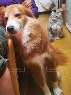 犬を見ている猫の写真・画像素材[4764388]