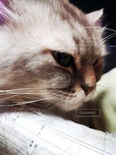 猫の横顔の写真・画像素材[4764398]