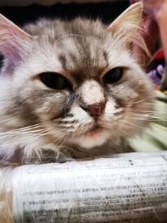 猫のクローズアップの写真・画像素材[4764402]