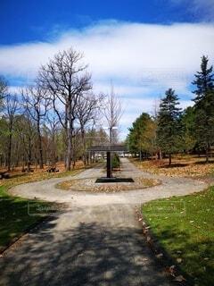 木の側に木がある道の写真・画像素材[4764407]