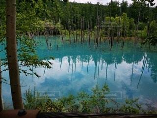 青い池の写真・画像素材[4770103]