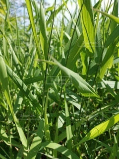 植物のアップの写真・画像素材[4774649]