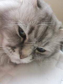 猫のクローズアップの写真・画像素材[4795444]