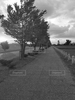 その両側に木が並んでいる道の写真・画像素材[4800478]