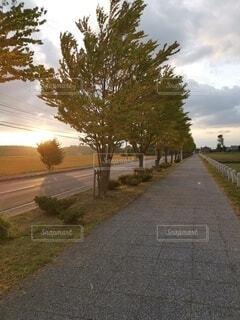 道路の脇に木がある道の写真・画像素材[4800483]