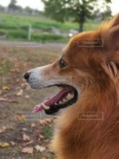 犬のクローズアップの写真・画像素材[4800497]