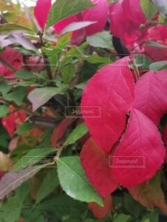 植物の上のピンクの花の写真・画像素材[4800496]