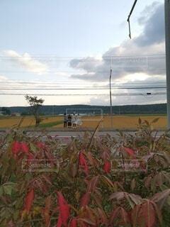 畑の前に後ろ姿の4人組の写真・画像素材[4800506]