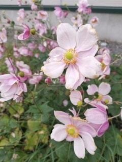 花のクローズアップの写真・画像素材[4912644]