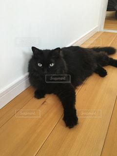 猫の写真・画像素材[212491]