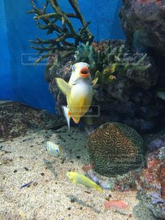 魚の写真・画像素材[213735]