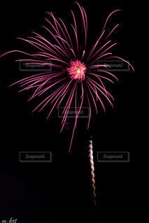 夜に咲く一輪の花の写真・画像素材[4754009]