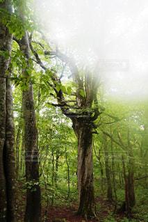 自然 - No.215903