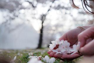 近くに花を持っている人の - No.1117096