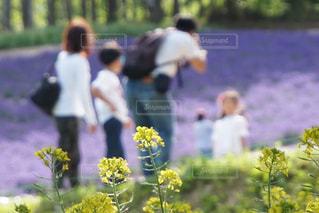 家族旅行で訪れた北海道富良野の富田ファームのラベンダー畑の写真・画像素材[2355448]