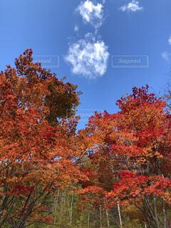 澄み渡る空と紅葉の写真・画像素材[4764874]