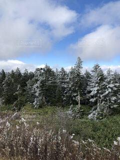 不思議な雪景色の写真・画像素材[4764877]