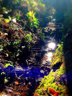 自然の写真・画像素材[214115]
