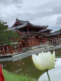 蓮の花と平等院の写真・画像素材[4757788]