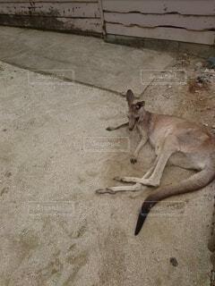 動物のクローズアップの写真・画像素材[4804014]