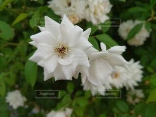 花のクローズアップの写真・画像素材[4804017]