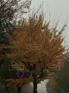 自然 - No.266089
