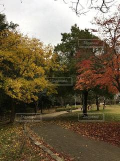 公園 - No.263976