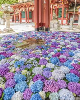庭の色とりどりの花の背景の写真・画像素材[4770559]
