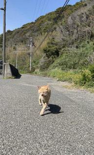 島の道を楽しそうに歩く猫の背景の写真・画像素材[4770549]