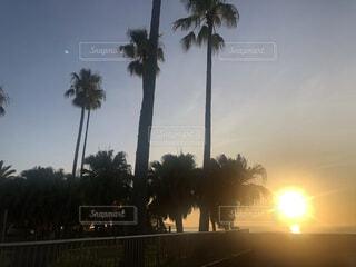 ヤシの木がある場所での日の出の背景パターンの写真・画像素材[4770555]