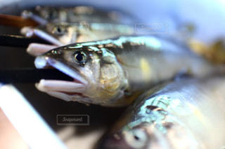魚の写真・画像素材[212797]