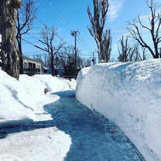 夏に雪道屯田の細長い公園の道の写真・画像素材[4754442]