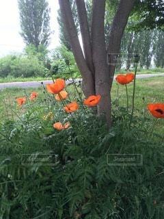 木の根に咲いてる。赤い花の写真・画像素材[4754851]