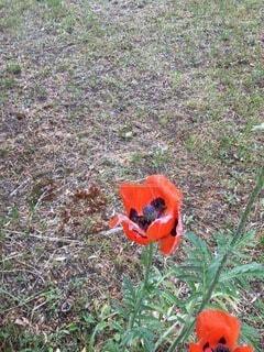 小さな公園の隅の花の写真・画像素材[4754852]