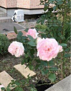 近所の庭の写真・画像素材[4764466]