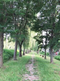 散歩道の写真・画像素材[4768930]