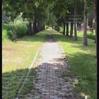 僕の散歩道の写真・画像素材[4761568]