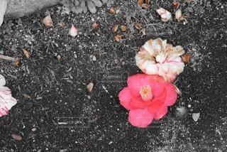 花の写真・画像素材[17029]