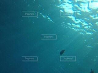 ふいに写り込んだ魚の写真・画像素材[4771077]