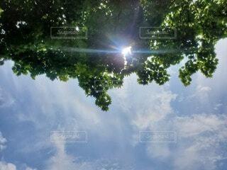 暑い夏の日の写真・画像素材[4755964]
