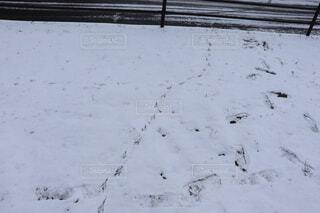 カラスとヒトの足跡の写真・画像素材[4757844]