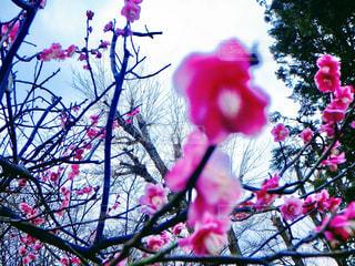 春 - No.375014