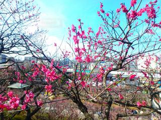 春の写真・画像素材[375016]