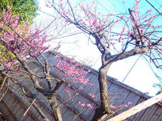 春の写真・画像素材[375017]