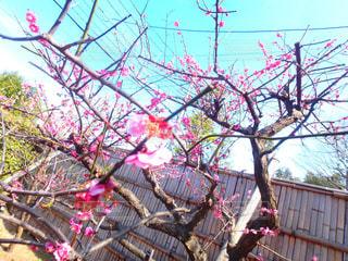 春の写真・画像素材[375019]